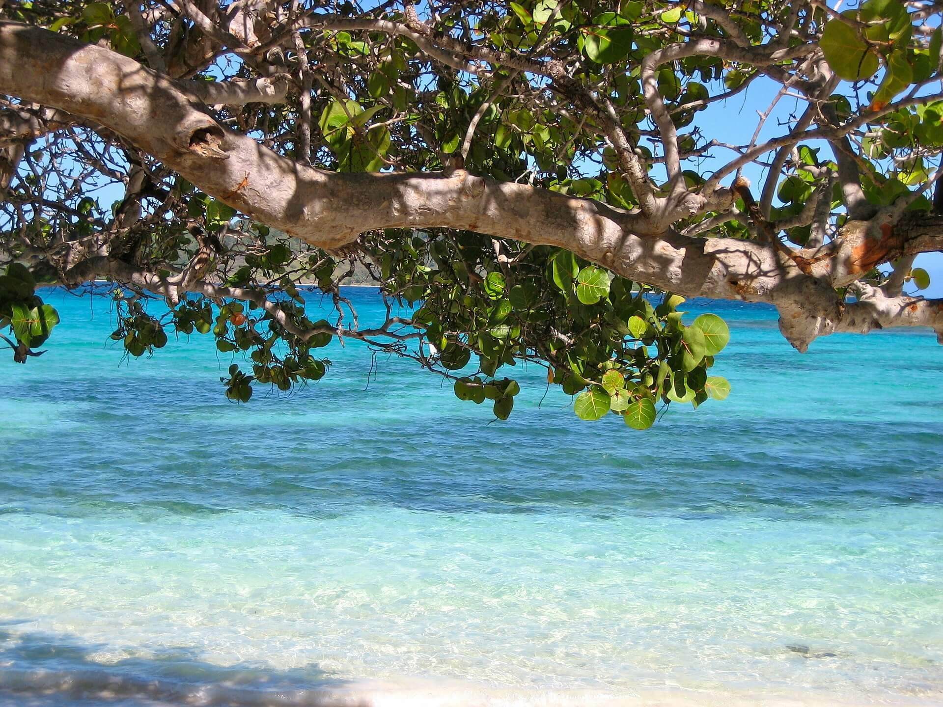 Barbados Beach Image